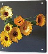 Gerbera bouquet Acrylic Print