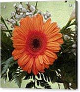 Gerbera Daisy Acrylic Print by Jeff Kolker