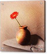 Gerbera In Stone Vase Acrylic Print