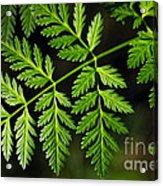 Gereric Vegetation Acrylic Print