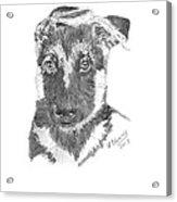 German Shepherd Pup Acrylic Print