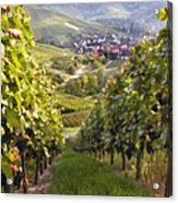 German Vineyard Acrylic Print