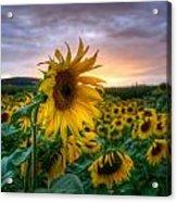Get Sun Acrylic Print