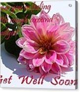 Get Well Soon - Louise Dahlia - Pink Flower Acrylic Print