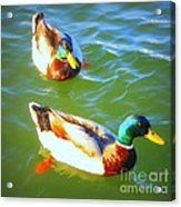 Get Your Ducks In A Row Acrylic Print