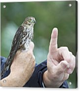 Getting The Finger Acrylic Print