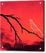 Ghost Bird Acrylic Print