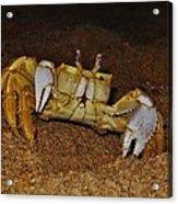 Ghost Crab 6 11/01 Acrylic Print