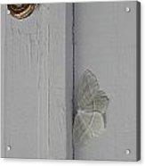 Ghost Doorbell Moth Acrylic Print