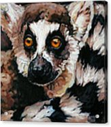Ghost Of Madagascar Acrylic Print