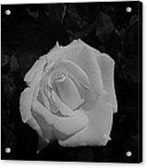Ghost Rose Acrylic Print