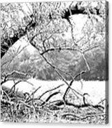 Ghost Tree 1 Of 3 Acrylic Print