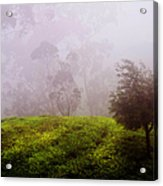 Ghost Tree In The Haunted Forest. Nuwara Eliya. Sri Lanka Acrylic Print