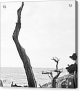 Ghost Tree Site Acrylic Print