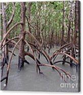 Ghostly Mangroves Acrylic Print