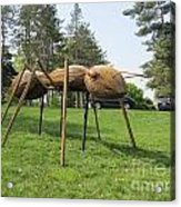Giant Ant Acrylic Print