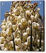Giant Bloom Acrylic Print