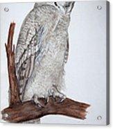 Giant Eagle Owl Acrylic Print