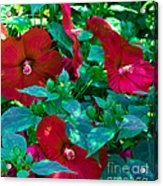 Giant Poppies Acrylic Print
