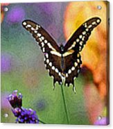 Giant Swallowtail Butterfly Photo-painting Acrylic Print