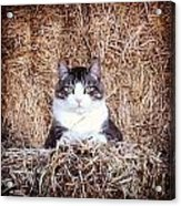 Giant The Handsome Cat Acrylic Print