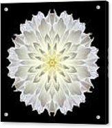 Giant White Dahlia Flower Mandala Acrylic Print by David J Bookbinder