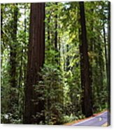 Giants And The Road Acrylic Print