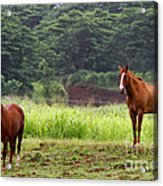 Giddy Up Horsy By Diana Sainz Acrylic Print