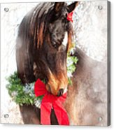 Gift Horse Acrylic Print by Sari ONeal
