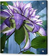 Gift Of Clematis Acrylic Print