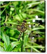 Gifts From Muck Bog 2 Acrylic Print