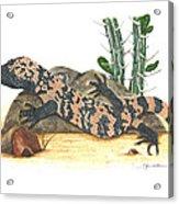 Gila Monster Acrylic Print