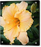 Gild The Lily Acrylic Print
