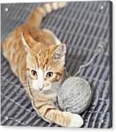 Ginger Cat With Yarn Ball Acrylic Print