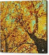 Ginkgo Tree  Acrylic Print
