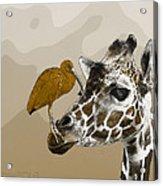 Giraffe And Friend Acrylic Print