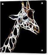 Giraffe Art Acrylic Print