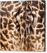 Giraffe Butt Acrylic Print by Adam Romanowicz