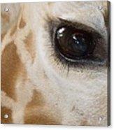 Giraffe Eye Acrylic Print