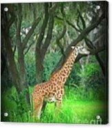 Giraffe In Florida Acrylic Print