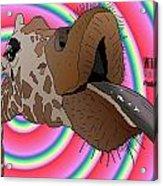 Giraffe Lick Acrylic Print