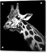 Portrait Of Giraffe In Black And White Acrylic Print