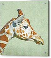 Giraffe Mug Shot Acrylic Print