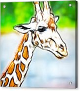 Giraffe Scrimshaw Acrylic Print