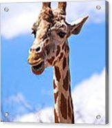 Giraffe Speak Acrylic Print