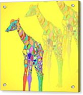 Giraffe X 3 - Yellow Acrylic Print