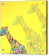 Giraffe X 3 - Yellow - The Card Acrylic Print