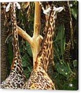 Giraffes In Love Acrylic Print