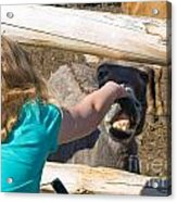 Girl Pets Donkey Acrylic Print