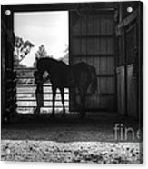 Girl With Horse Acrylic Print